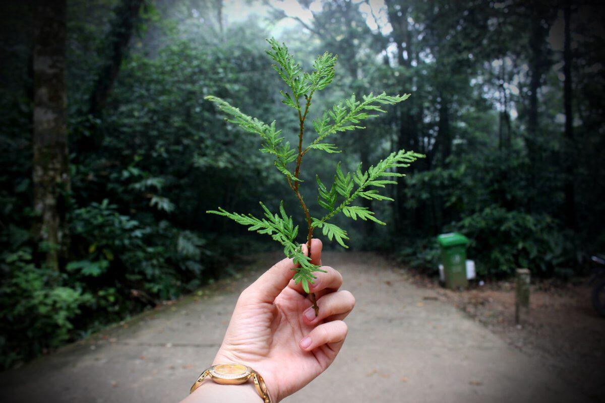 Czas na ekologię - Prognozy Saxo Banku na IV kwartał
