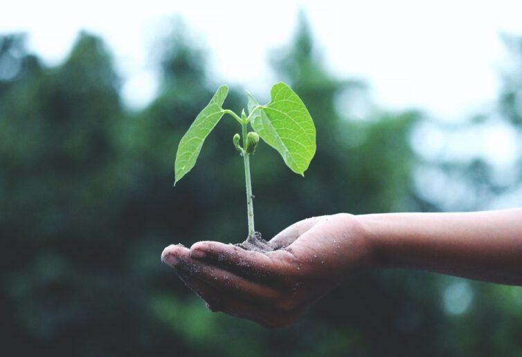 Europejski sen o ekologicznym reshoringu - Prognozy Saxo Banku na III kwartał 2020 r.