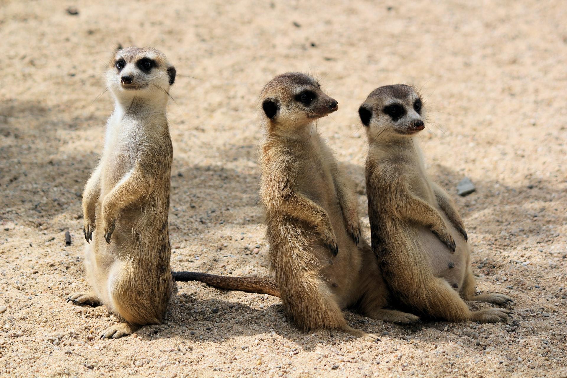 Nowelizacja ustawy o ochronie zwierząt