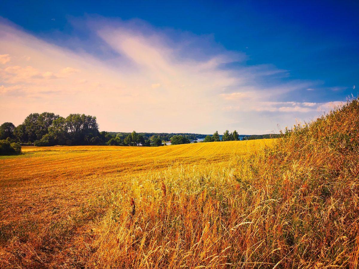 Deweloperzy o zmianach przepisów związanych z obrotem gruntami rolnymi
