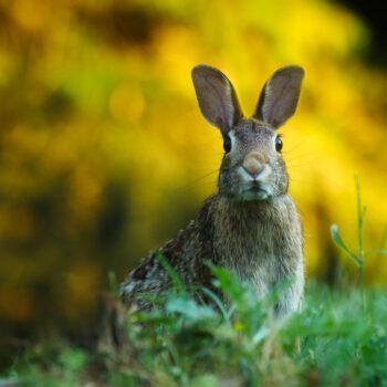 Rząd zrobi przerwę w epidemii… na Wielkanoc